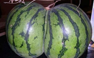 butt-shaped-watermelon