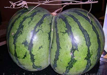 butt-shaped-watermelon